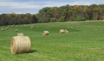 Wordless Wednesday: Fall in Virginia