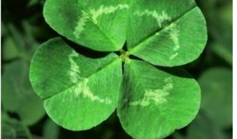 Thursday Thought: A Best Friend and A Clover