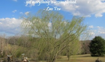 Thursday Thought: Nature's Accomplishments