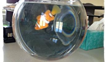 My Graduation Fish
