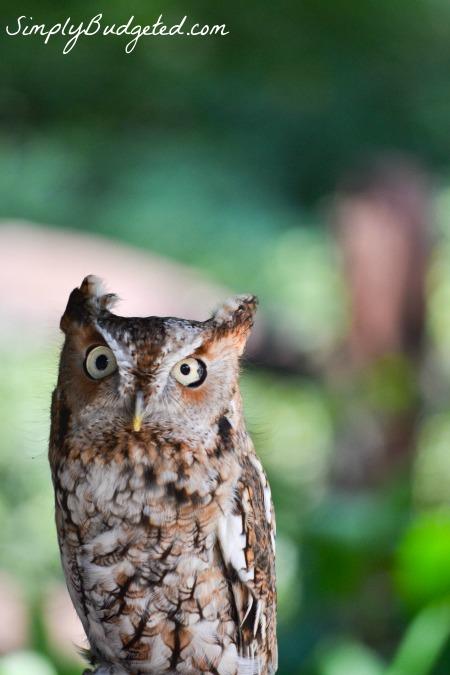 Busch Gardens Owl