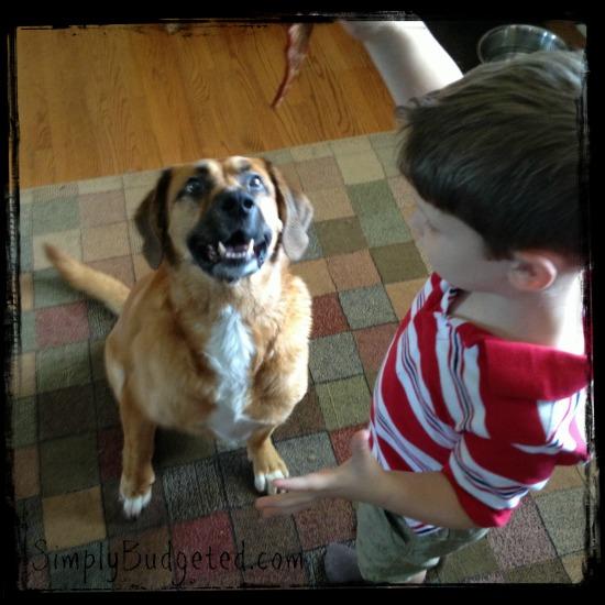 Matthew giving Buddy a healthy dog treat