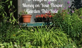 3 ways to save money on your flower garden this year