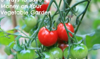 3 ways to save money on your vegetable garden