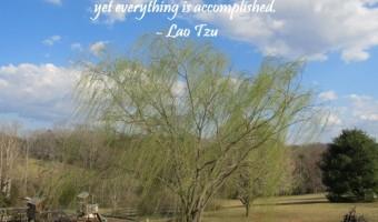 Thursday Thought: Nature's Accomplishments