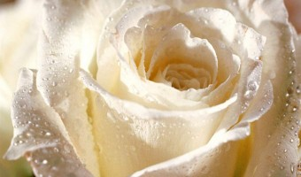Flower Myths and Superstitions