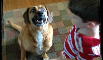 Healing with Healthy Dog Treats – Nudges