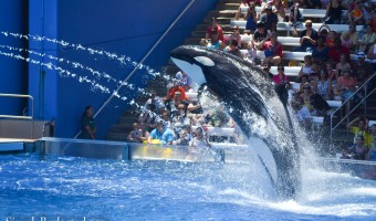 Discovering Central Florida Attractions