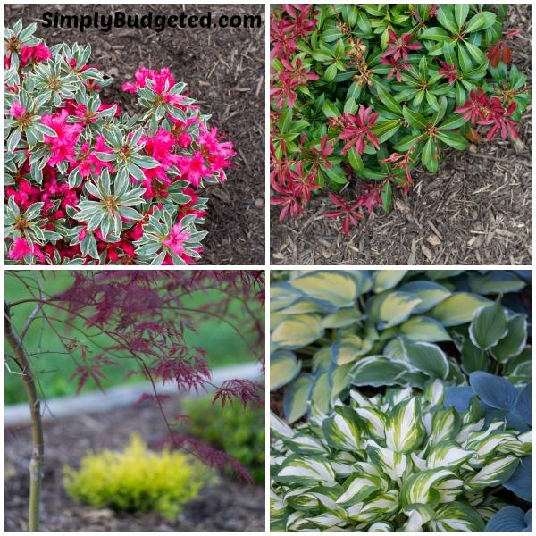 Garden Close Up Collage