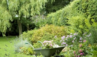 Beautiful and Easy Ways to Give Your Home & Yard a Bit More Privacy